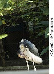 μεγάλος , παράξενος , πουλί