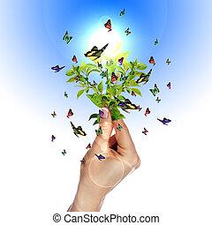 με πολλά χρώματα , πεταλούδες
