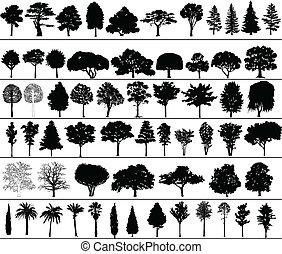 μικροβιοφορέας, δέντρα