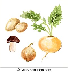 μικροβιοφορέας , θέτω , vegetables., πατάτα , μανιτάρι , νερομπογιά , κρεμμύδι , γογγύλι