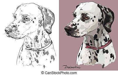 μικροβιοφορέας , μονόχρωμος , πορτραίτο , ζωγραφική , χέρι , γραφικός , δαλματικός σκύλος