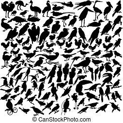 μικροβιοφορέας , πουλί