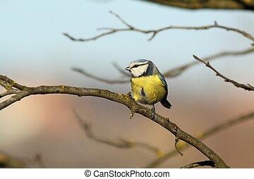 μικροσκοπικός , κήπος , παράρτημα , πουλί