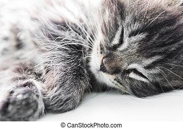 μικρός , γατάκι , παράθυρο , κοιμάται
