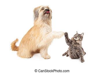μικρός , μεγάλος , σκύλοs , γάτα , αβοήθητος 5