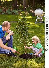 μικρό , αγόρι , δέντρο , κράτημα
