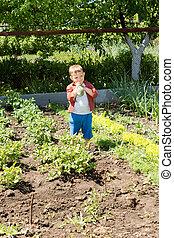 μικρό , αγόρι , λαχανικά , φρέσκος , αγάπη