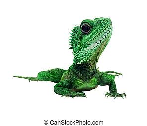 μου , σαύρα , πράσινο