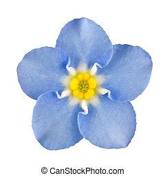 μπλε , αγαθός ακμάζω , μη με λησμονεί , απομονωμένος