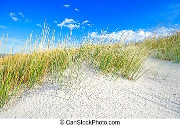 μπλε , αμμόλοφοι , ουρανόs , άμμοs , άσπρο , γρασίδι , παραλία