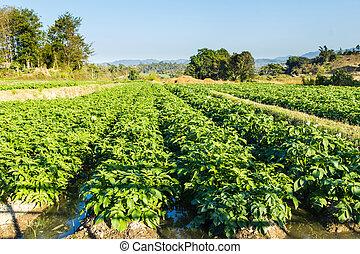 μπλε , γραφική εξοχική έκταση. , κλίμα αγρός , πατάτα