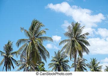 μπλε , δέντρο , καρίδα , ουρανόs , κάτω από