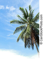 μπλε , δέντρο , ουρανόs , βάγιο , φόντο , πράσινο