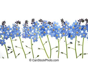 μπλε , εμένα , μη , ξεχνώ , λουλούδι