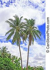 μπλε , ινδική καρύδα αρπάζω με το χέρι , δέντρα , sky.