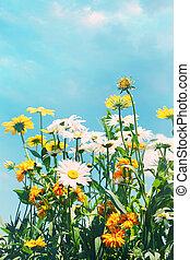 μπλε , καλοκαίρι , λουλούδια , ουρανόs , εναντίον