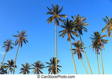 μπλε , καρίδα , φόντο , ουρανόs , δέντρο , plam