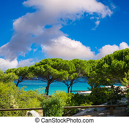 μπλε , πάνω , ουρανόs , δέντρα , οκεανόs , coastline., φόντο , πεύκο , κορσική