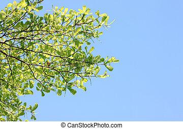 μπλε , παράρτημα , δέντρα , sky.