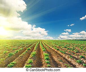μπλε , πατάτα , κλίμα αγρός , κάτω από , τοπίο
