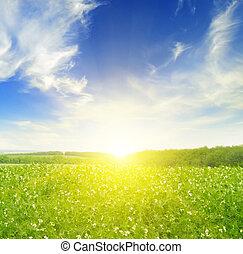 μπλε , πεδίο , ουρανόs , ηλιοβασίλεμα , μπιζέλι