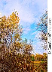μπλε , φθινόπωρο , ουρανόs , δάσοs , δρόμοs