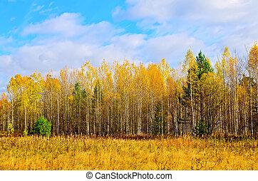 μπλε , φθινόπωρο , ουρανόs , δάσοs , κίτρινο