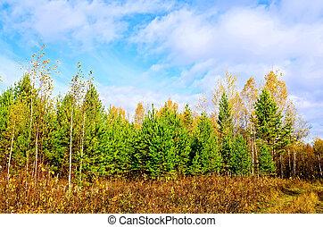 μπλε , φθινόπωρο , ουρανόs , δάσοs , πεύκο