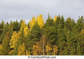 μπογιά , φύλλωμα , treetops , δάσοs , φθινόπωρο