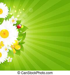 μπουκέτο λουλουδιών , με , γρασίδι , και , ξαφνική δυνατή ηλιακή λάμψη