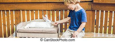 μπόμπιραs , αγόρι , θωπεία , και , παίξιμο , με , λαγόs , μέσα , ο , γλυκοζαχάρωμα , zoo., γενική ιδέα , από , sustainability , αγάπη , από , φύση , σεβασμός , για , άρθρο ανθρώπινη ζωή και πείρα , και , αγάπη , για , animals., ecologic, biologic, vegan , χορτοφάγοs , σημαία , μακριά , σχήμα