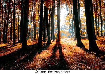 μυστηριώδης , δάσοs