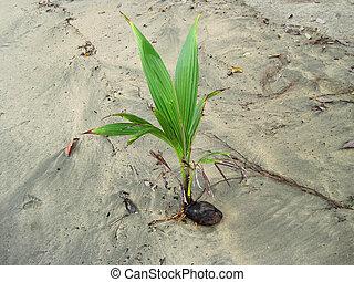 μωρό , παραλία , φοινικόδεντρο