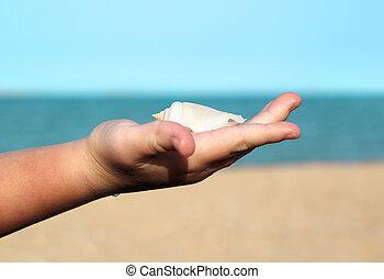μωρό , όστρακο , βάγιο , θάλασσα , φόντο
