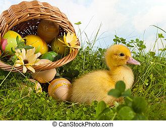 μωρό , duckling , με , easter αβγό