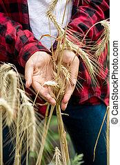 νέος , γυναίκα , γεωργόs , κράτημα , ώριμος , σιτάρι , ears., γενική ιδέα , από , βασικός αισθημάτων κλπ
