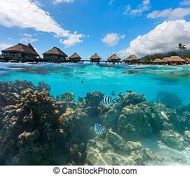 νερό , βελάζω , επάνω , γαλλικά polynesia
