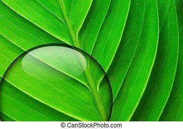 νερό , πράσινο , σταγόνα , φύλλο