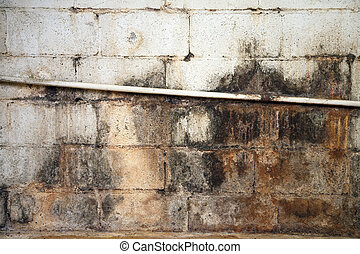 νερό , σκάρτος , και , μουχλιασμένος , υπόγειο , τοίχοs