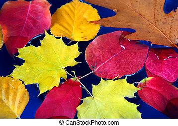 νερό , φύλλα , πέφτω