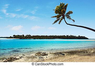 νησί , 1 πόδια , aitutaki , λιμνοθάλασσα , βράζω απομονώνω , τοπίο