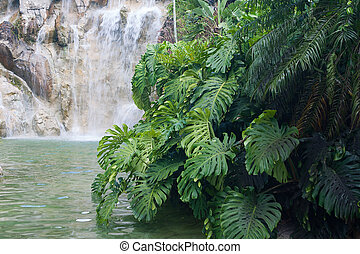 νησί , de , καταρράχτης , deshaies, botanique, guadeloupe , jardin