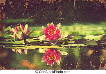 νούφαρο , μέσα , λιμνούλα , .vintage, λουλούδια , κάρτα , επάνω , γριά , χαρτί
