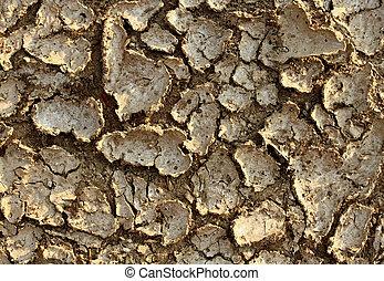 ξηρασία , περιβάλλον