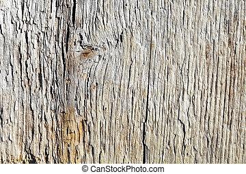 ξύλινος , πάνω , επιφάνεια , σάπιος , πίνακας , κλείνω