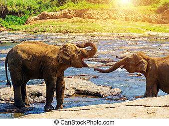 οικογένεια , ποτάμι , δάσοs , βαθύς , ελέφαντας