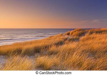 ολλανδία , νησί , αμμόλοφοι , δύση ακρογιαλιά , texel