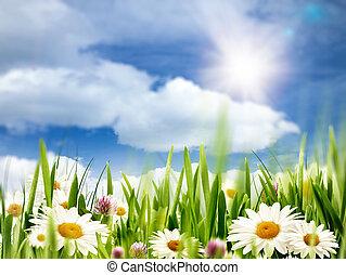 ομορφιά , καλοκαίρι , αφαιρώ , περιβάλλοντος , φόντο , με , μαργαρίτα , λουλούδια