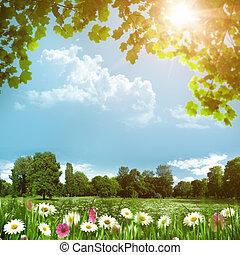 ομορφιά , λιβάδι , με , μαργαρίτα , λουλούδια , αφαιρώ , φυσικός , φόντο