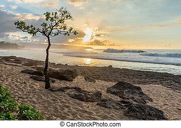 ομπρέλα , βραχώδης , σημείο , δέντρο , χαβάη , ακτή , ηλιοβασίλεμα , βόρεια , oahu